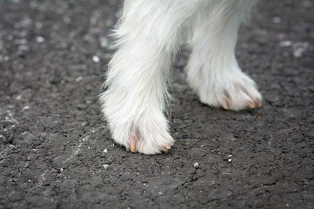Pin On Trimming Dog Toenails
