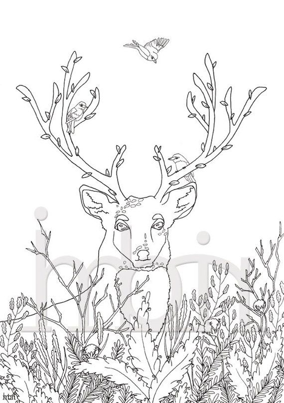 Deer colouring page, Printable Coloring Sheet, instant