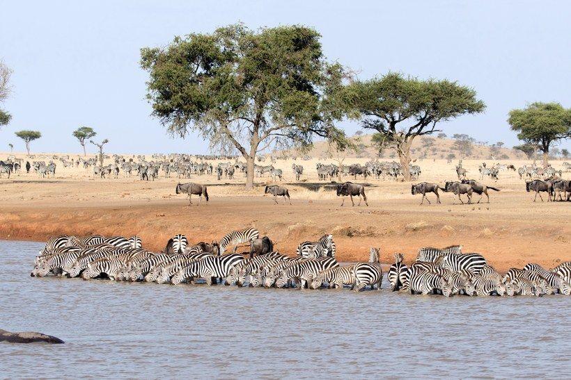The 50 Most Beautiful Places in the World -  Serengeti National Park, Tanzania Tanzania's portion of the Serengeti is the ideal location for a - #beautiful #catnoir #frozenelsa #handmadehomedecor #homedecoritems #homedecorquotes #miraculousladybug #Onward #places #SpongeBob #WonderPark #world