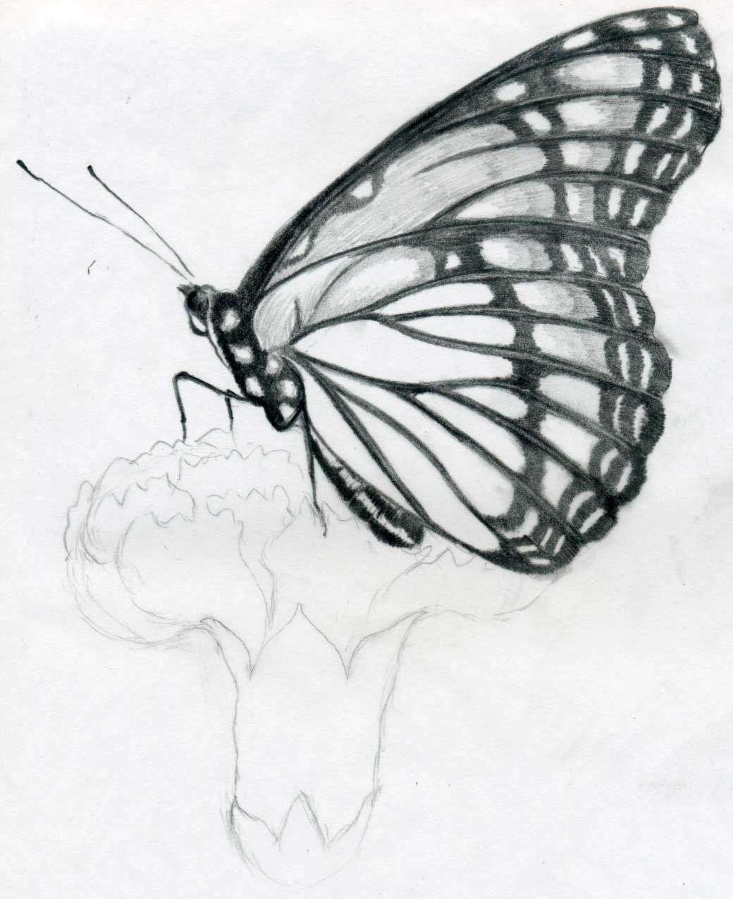 Uncategorized Drawing Of Butterflies drawing your outline will look like the first thumbnail i prepared a couple of easy butterfly pencil drawings here for you today we draw step by this one sitting