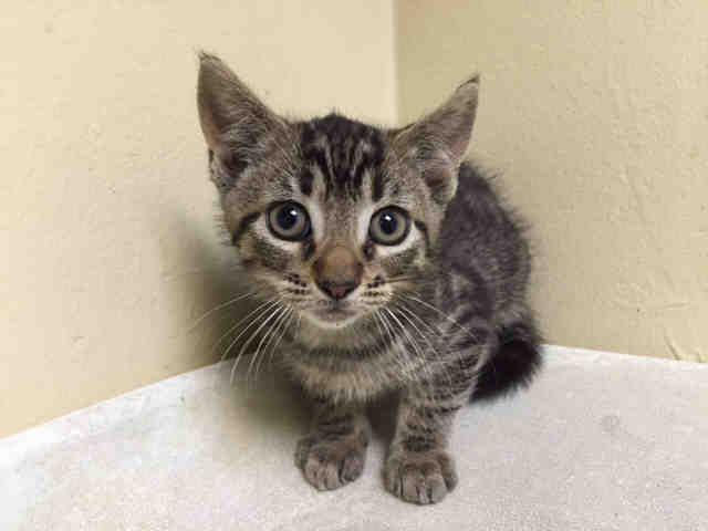 TANG A1078193 Foster cat, Cat help, Cat shelter