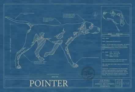 Animal blueprint company pointer dog print dog blueprints animal blueprint company pointer dog print malvernweather Gallery