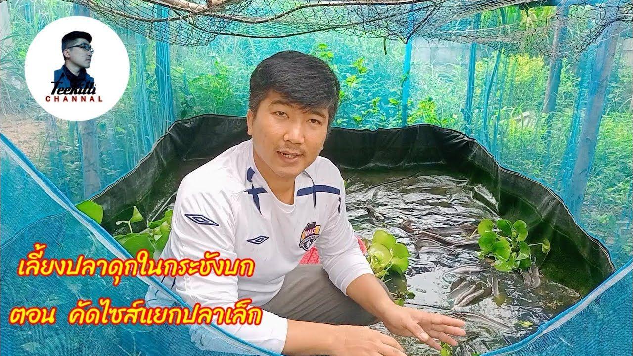 เล ยงปลาด กในกระช งบก ตอน ค ดไซส แยกปลาเล ก Teekittichannal Youtube กบ