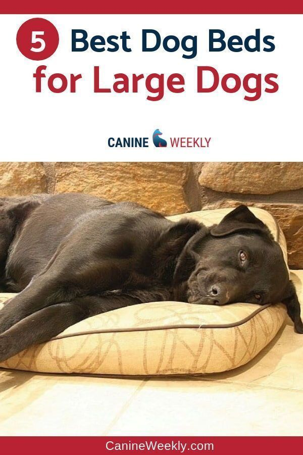 7 Best Dog Beds for Large Dogs in 2020 Cool dog beds