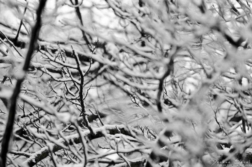 winter snow time