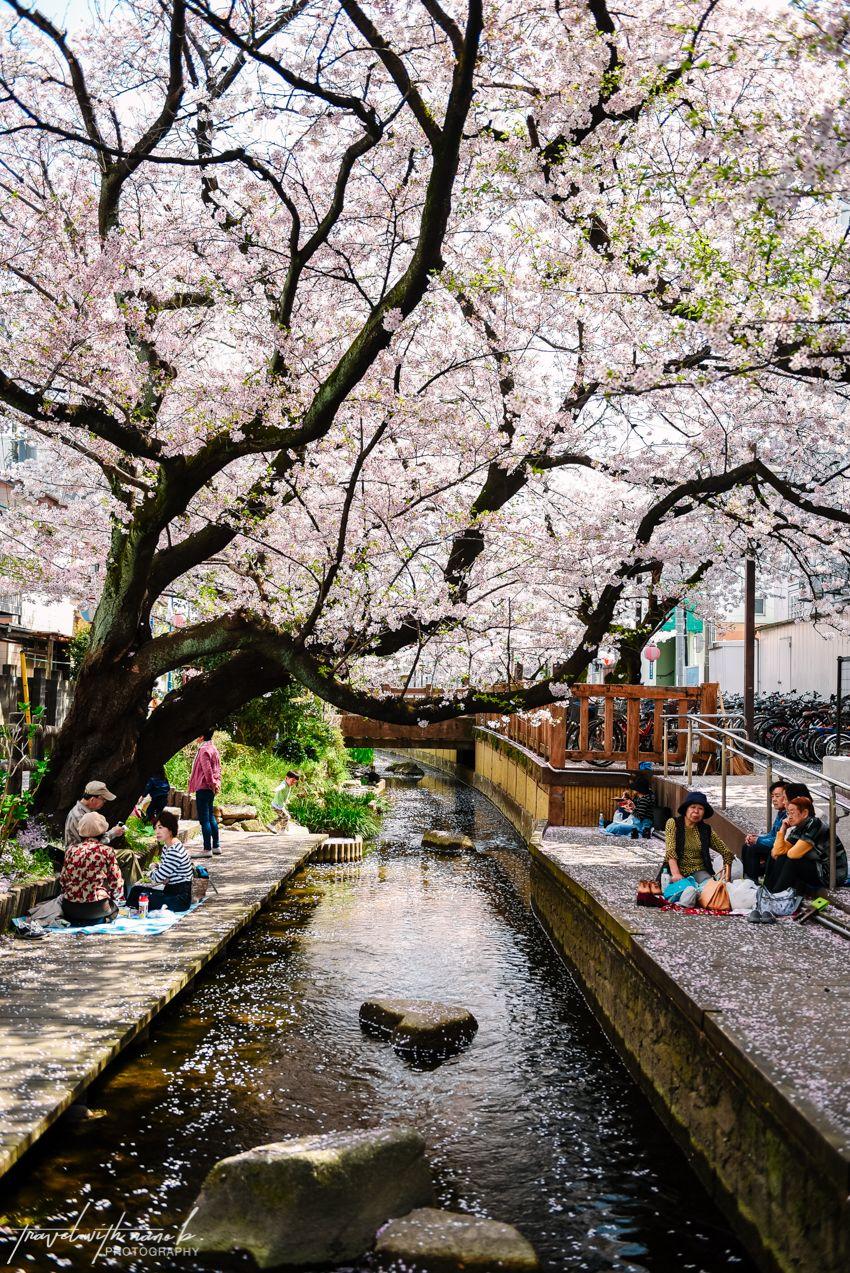 16++ Cherry blossom animal crossing ideas