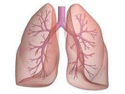 Ik heb een afbeelding gekozen van longen omdat mijn hoofdpersonnage longkanker heeft.