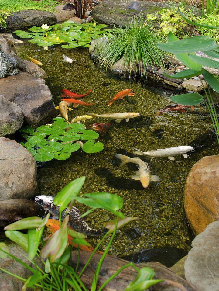 Gemeinsame flacher Koi-Teich #flacher #teich | Garten ideen | Fischteich @XX_01
