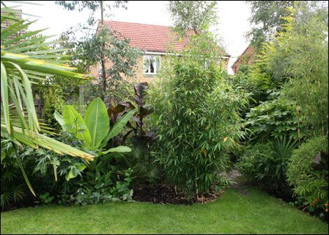 Tropical Garden Ideas Uk knotty ash tropical garden | tropical garden plants | pinterest