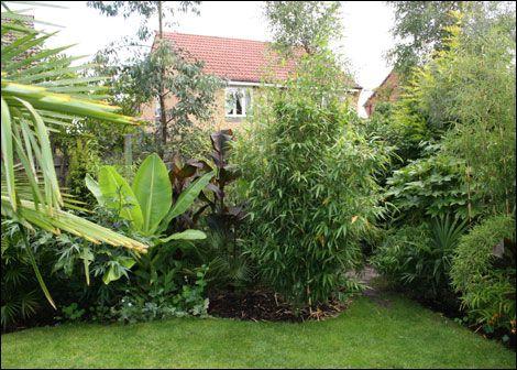Tropical Garden Ideas Uk knotty ash tropical garden | tropical garden plants | pinterest