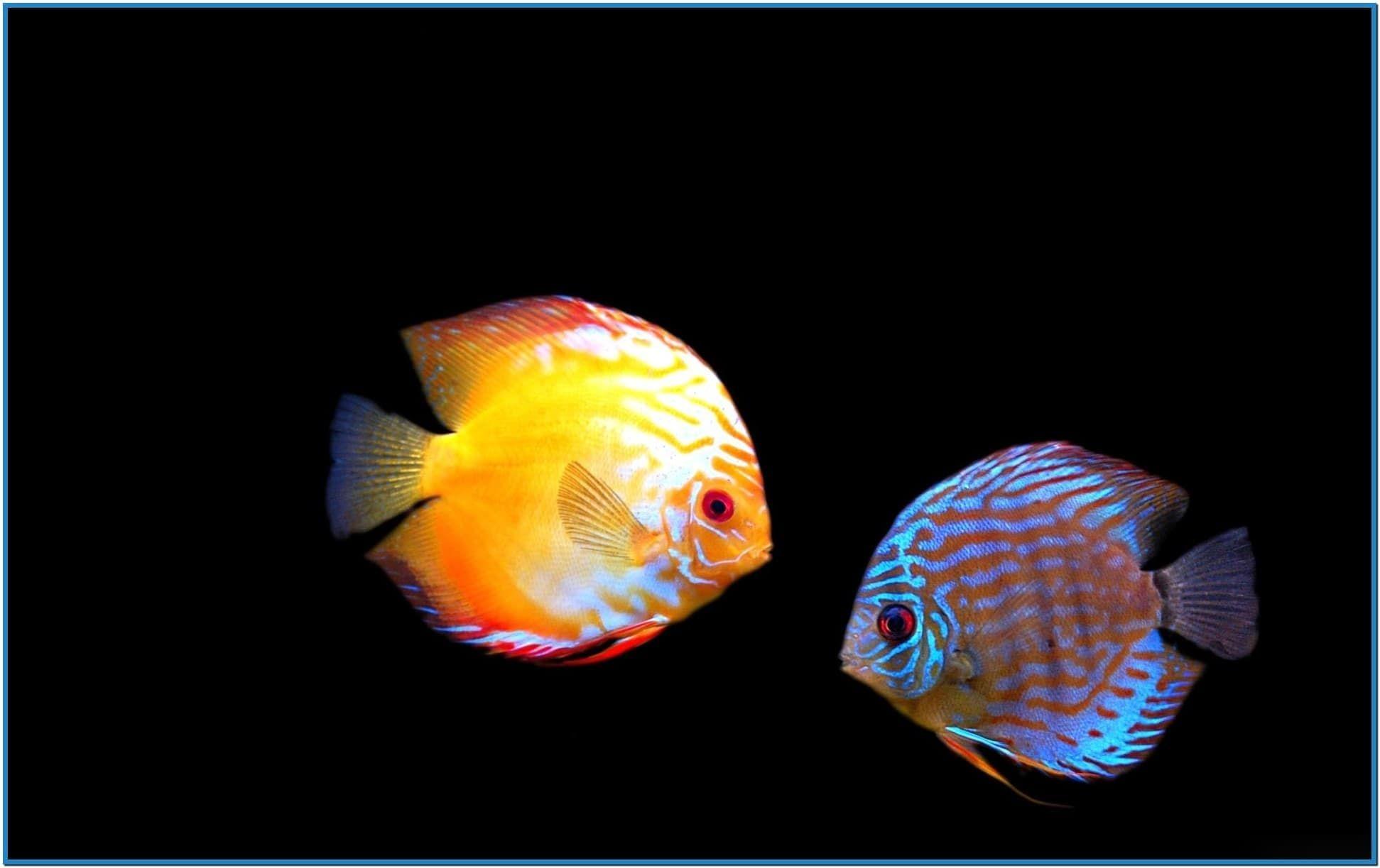 Virtual aquarium screensaver windows 7