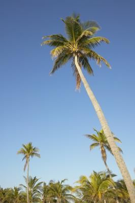 How To Ly Epsom Salts Palm Trees