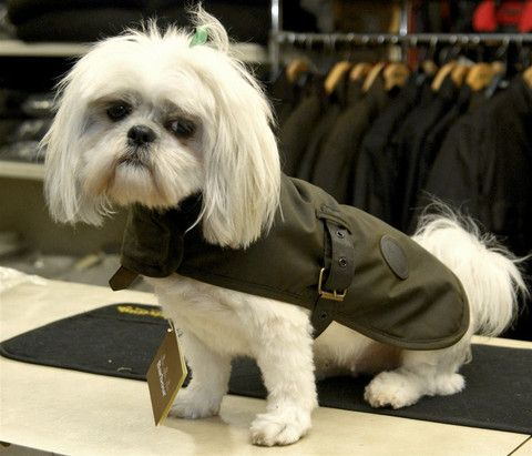 Barbour Dog Coat Olive Green Waxed Cotton Dco0003ol71 Dog Coats