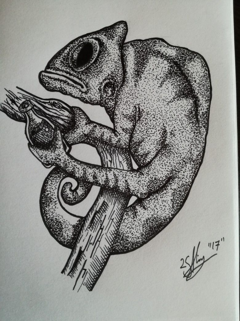 Fineliner chameleon, pen work, illustration