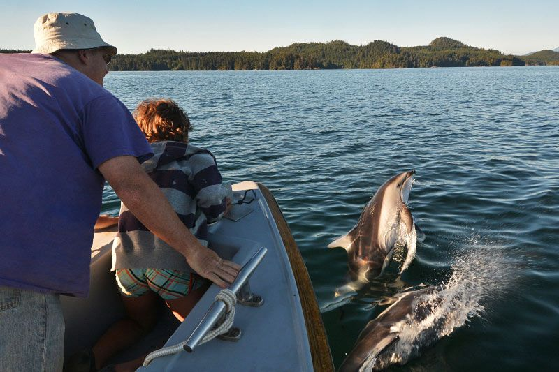 Porpoises riding the bow wave: Orca Dreams offers kayaking, whale watching and luxury camping on Compton Island, Blackney Pass, British Columbia