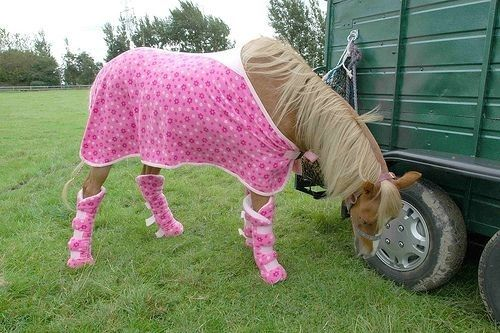 This horse is experiencing the shame of getting caught in her laundry-day outfit