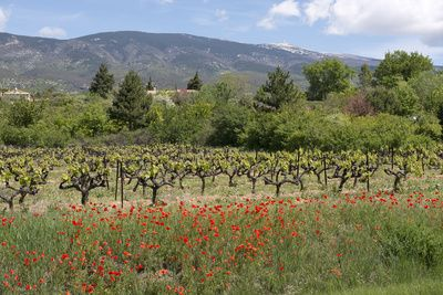 Rhone valley , Posters and Prints at Art.com