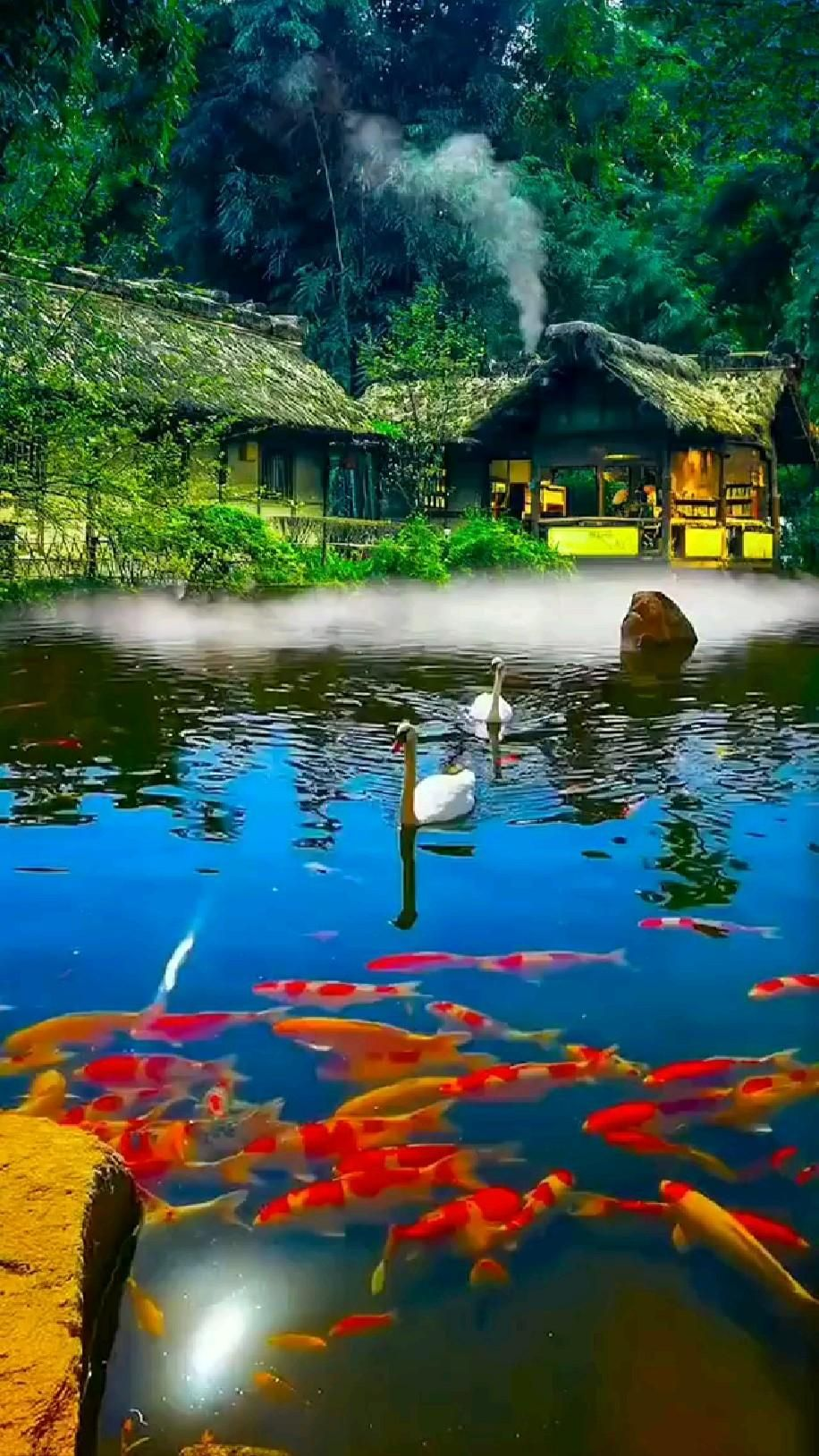 Nature Scene water 💧