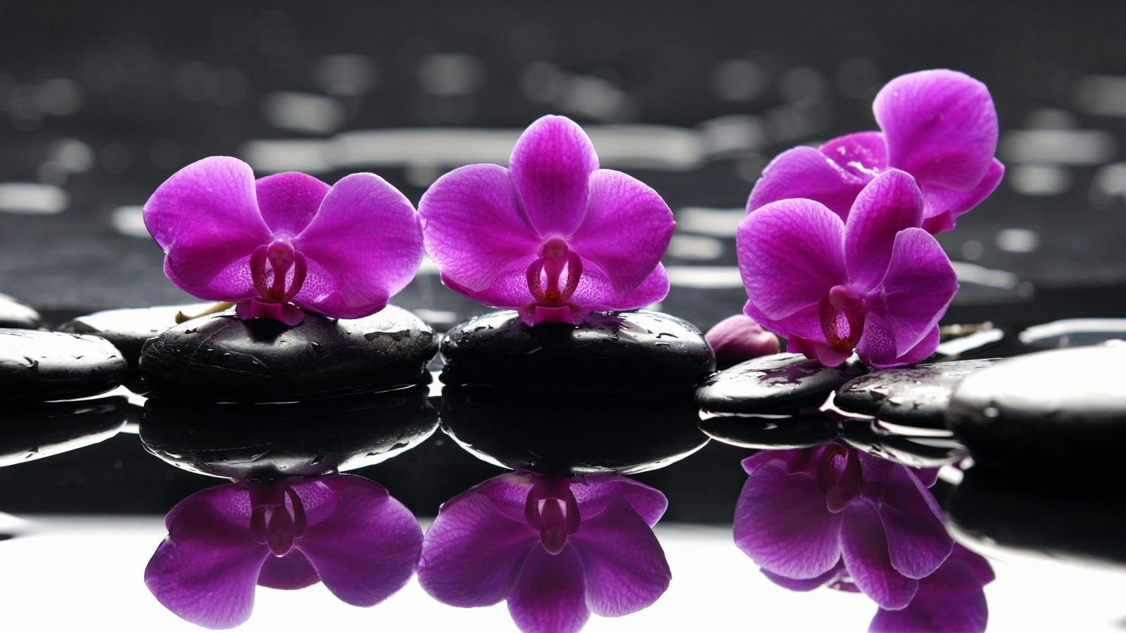 Orchids Reflecting Purple Flowers Wallpaper Orchid Wallpaper Purple Orchids