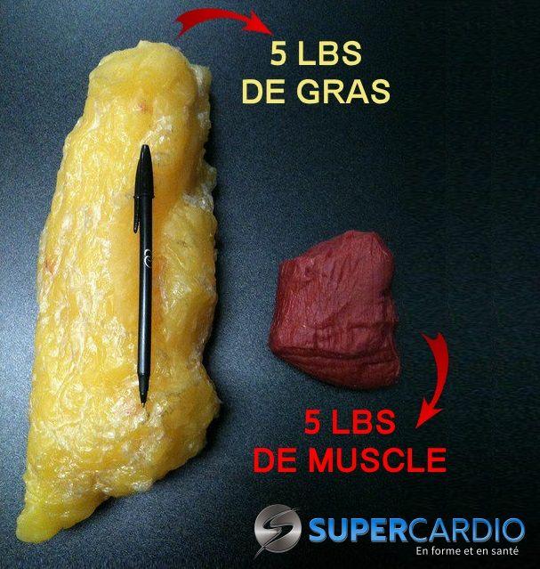 anabolisant perte de graisse
