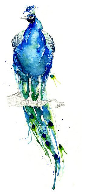 Peacock experiment by Amy Holliday, via Flickr