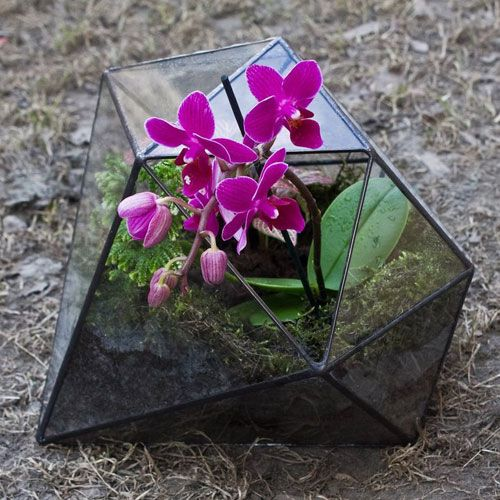 Flora-Glass — цветочные аквариумы. Флорариумы. Вазы для флорариумов. Мастер-классы