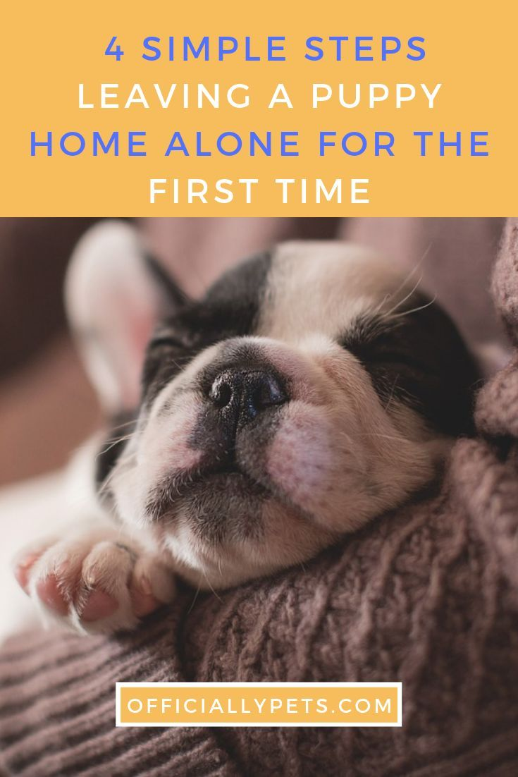 Leaving A Puppy Home Alone For The First Time 4 Simple Steps