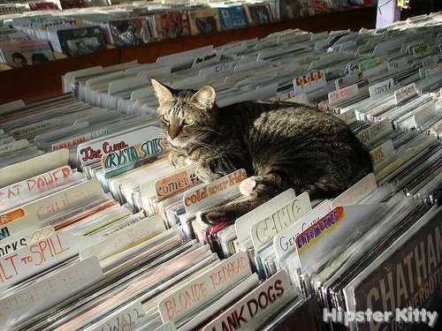 Every #vinyl shop needs a help cat