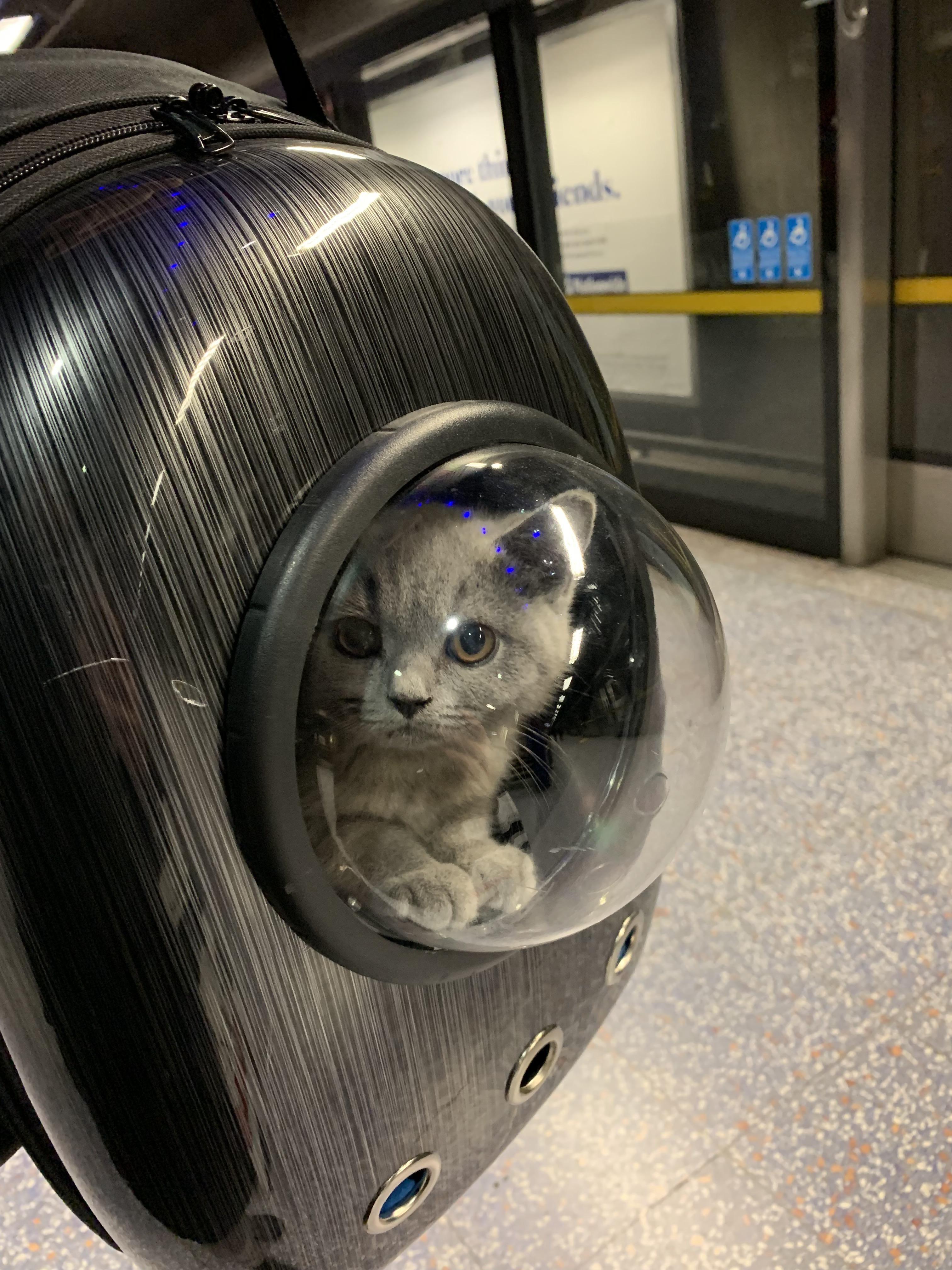 PsBattle Tiny kitten takes the London Underground. Tiny