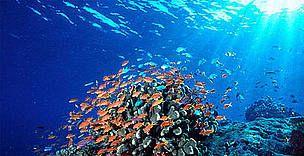 coral triangle - Google Search