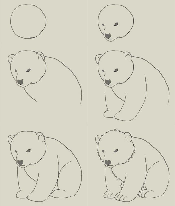 how to draw polar bear cub