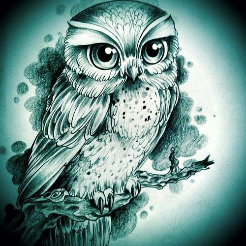 Pin By Bettina Kellberger On Ink Owls Drawing Cute Owl Drawing Owl Tattoo Design