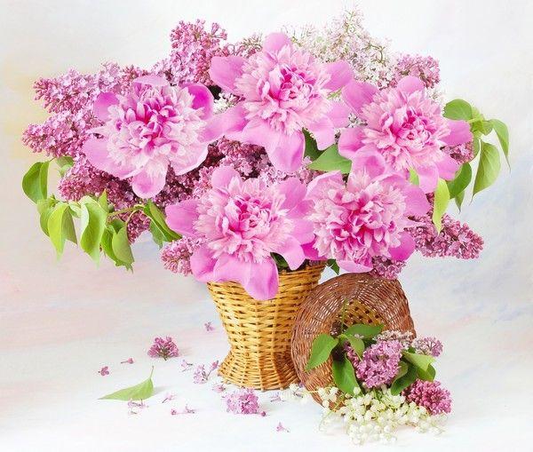 Fond D Ecran Bouquets Fleurs Flowers Wallpapers Pranicka