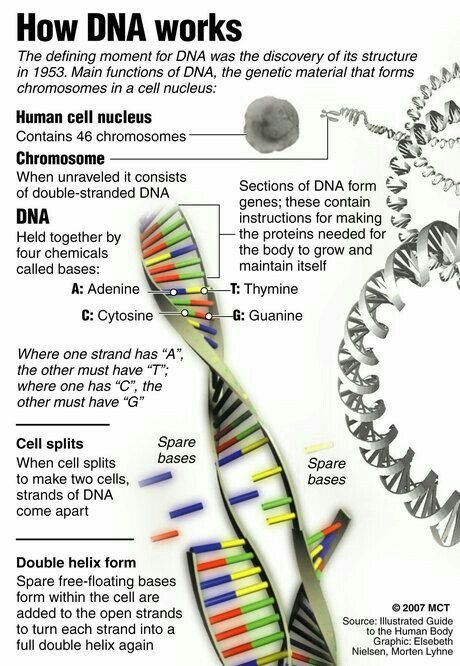 How DNA Works. | Teaching biology, Science biology, Biology notes