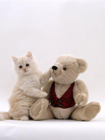 Kitten Bear Two Of My Very Very Fav S Cream Teddy Bear Cute Animals Kissing Kittens Cutest