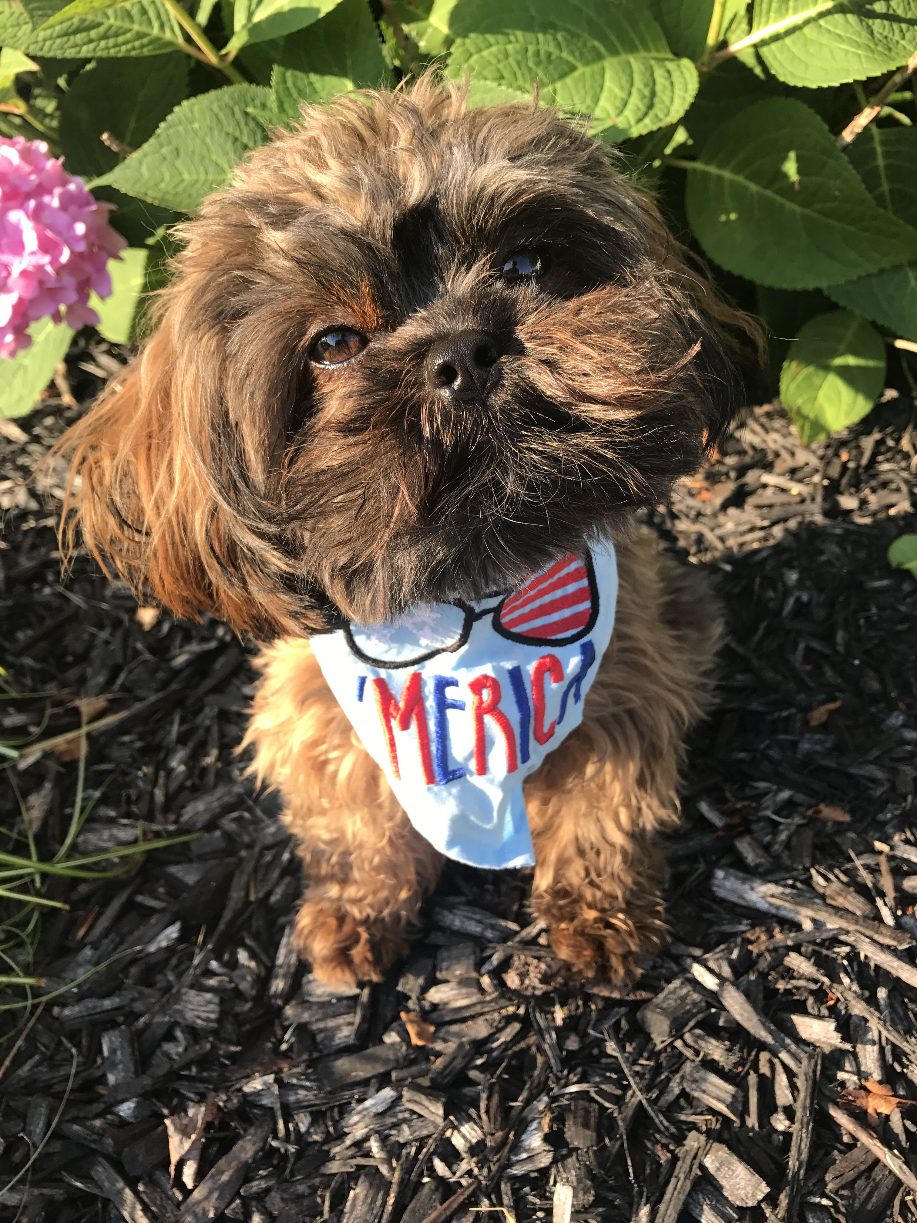 Shihpoo Dog Bandana Fourth Of July Embroidered