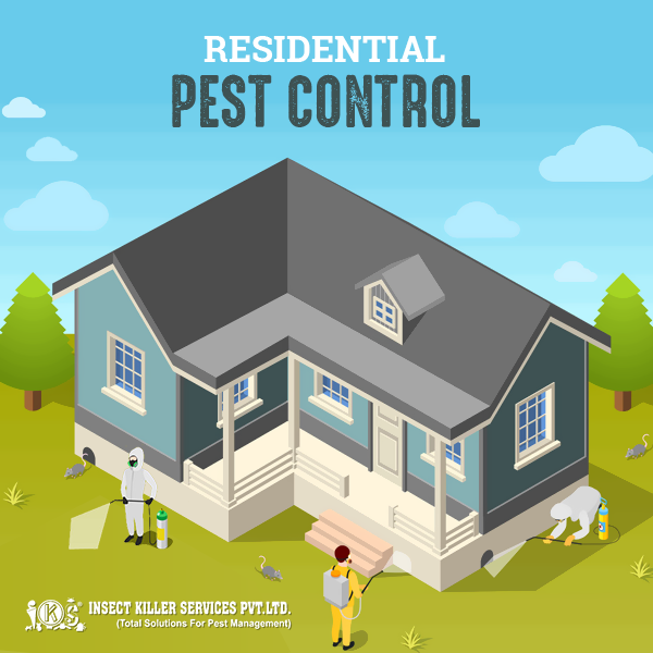 Pin on Insect Killer Service (PEST CONTROL)