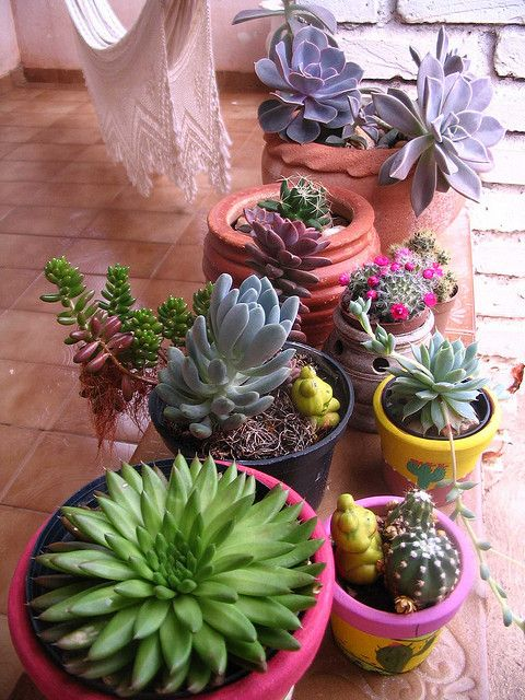 Cactos e suculentas by Sapequices!, via Flickr