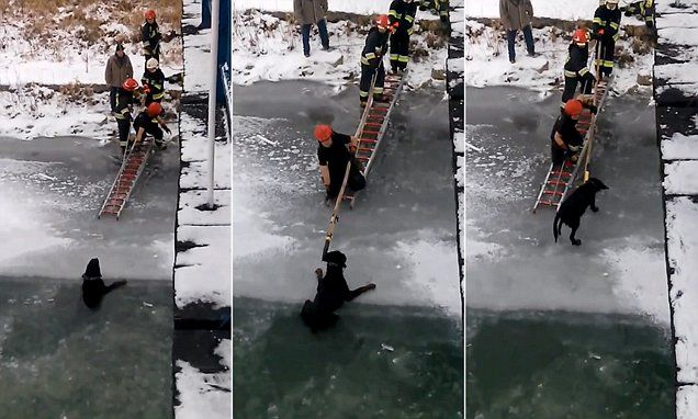 Polish pooch rescued from icy river by firemen #DailyMail