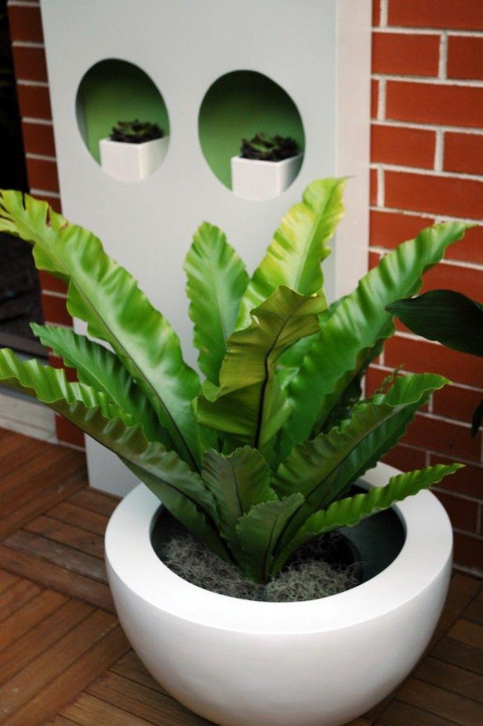 Pflanzen Die Kein Licht Brauchen eine komposition aus einigen pflanzen die wenig licht brauchen