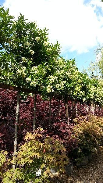 Plant Privacy Screen Living Fence