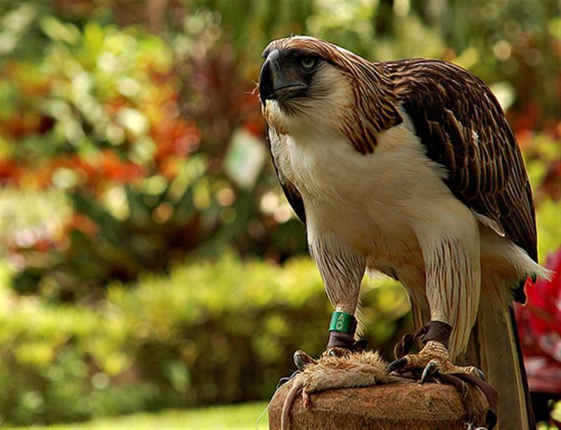 Top 10 Tourist Spots In Davao City Philippine Eagle Tourist