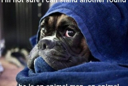 Funny Boxer Dog Meme : Boxer dog funny pictures 34r2thjki it's a dog's life pinterest