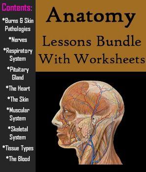 Human Anatomy and Physiology Bundle   Anatomy   High school biology