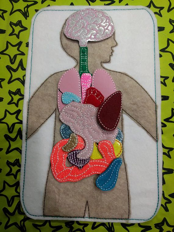 Large Anatomy 18 Piece Play Set Felt Board With Organs Learning
