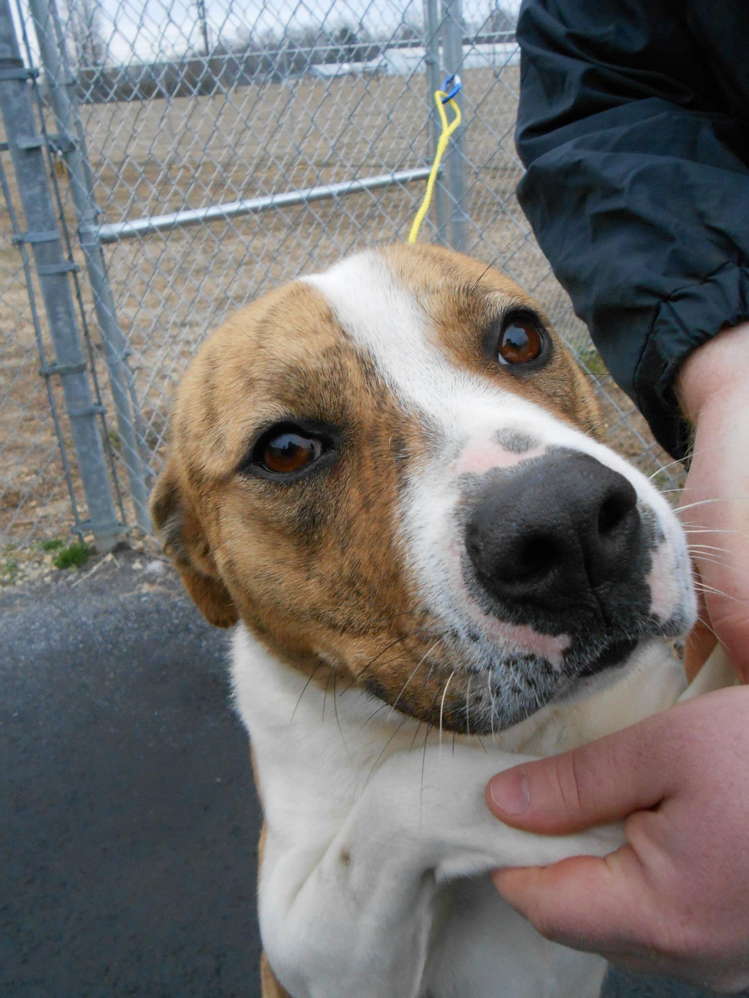 Please Share Gassing Shelter Rowan County Animal Shelter 704