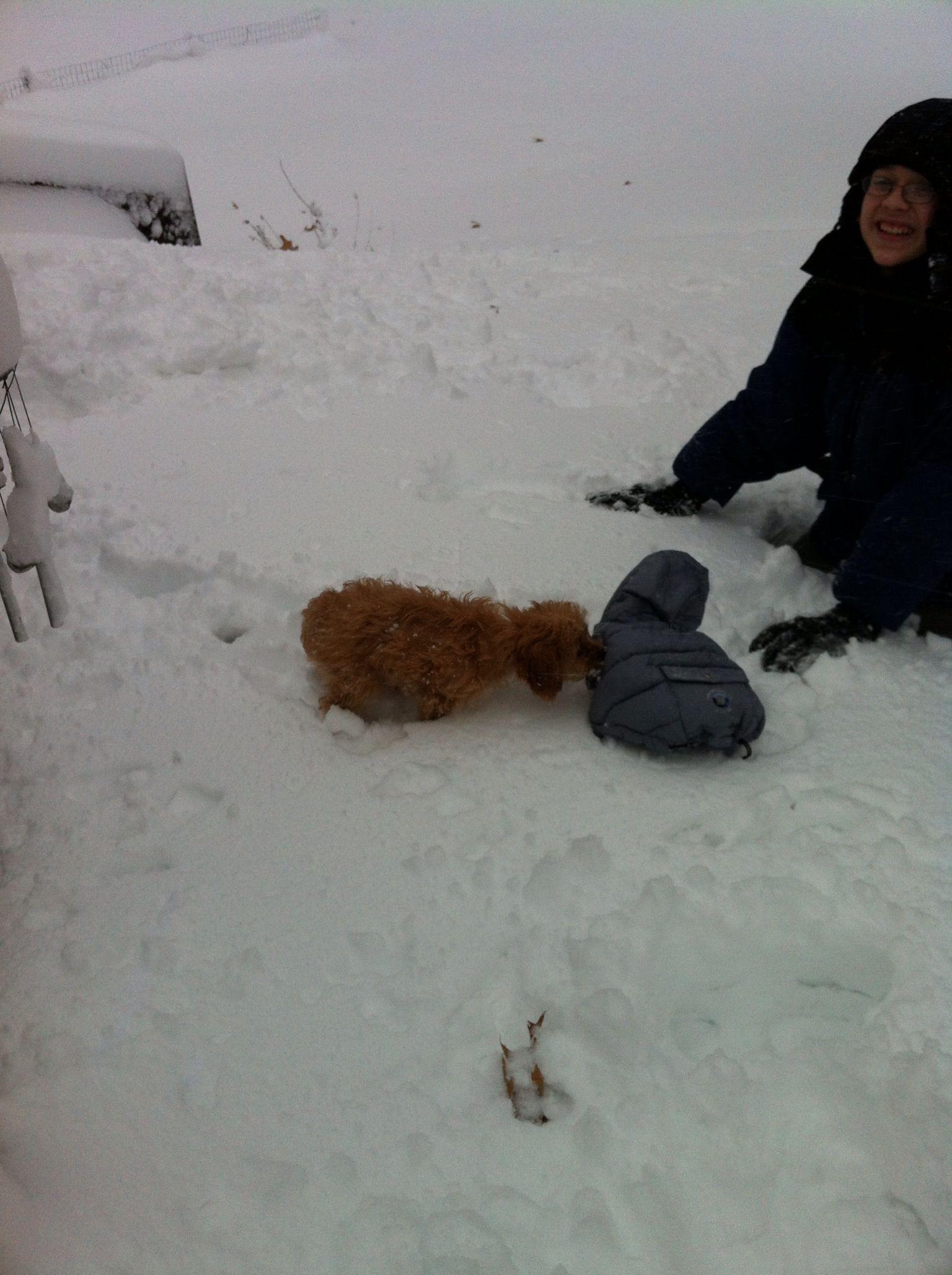 Puppy enjoys her first winter with her best boy My son