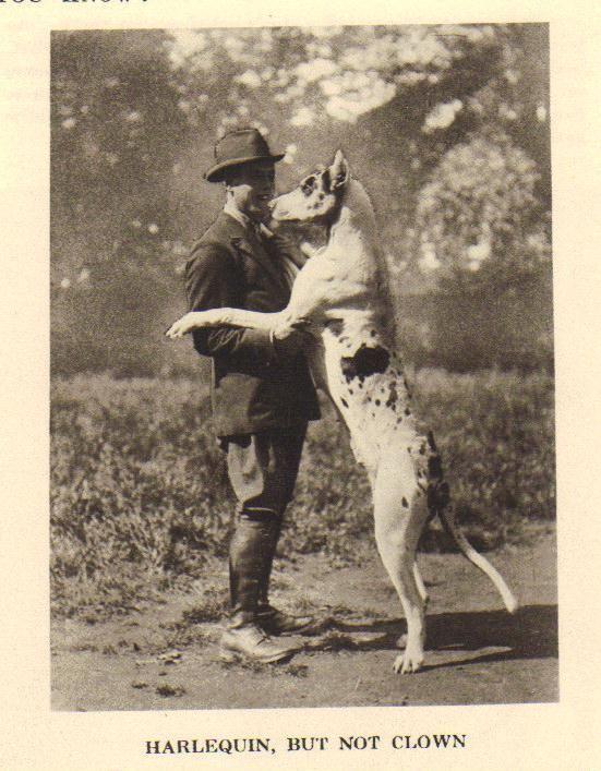 1931 Vintage Dog Print Buy It Now 15 Vintage Dog Great Dane