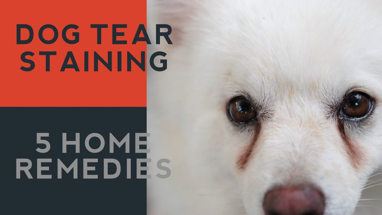 Tear Staining In Dogs 5 Natural Answers Youtube Dog Tear