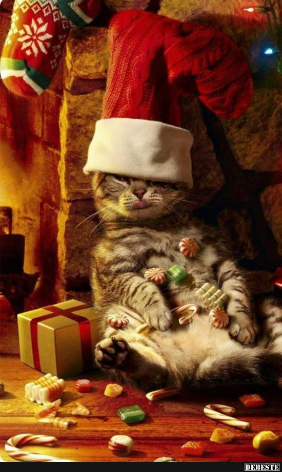 schönes weihnachtsfest   lustige bilder sprüche